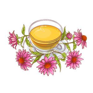 echinacee_infusion_antibiotique_naturel