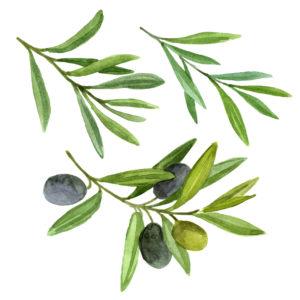extrait_feuilles_olivier_antibiotique_naturel